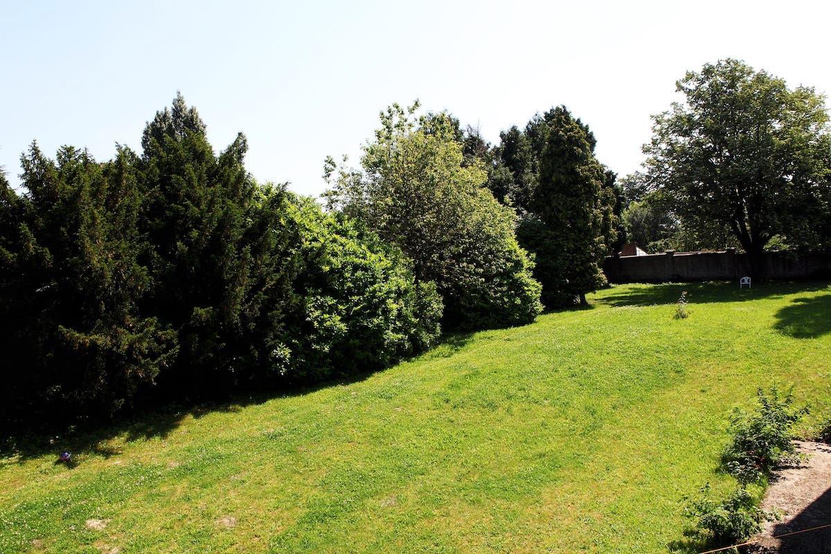 Les-Cygnes-de-lEtang-Charleroi-Jardins